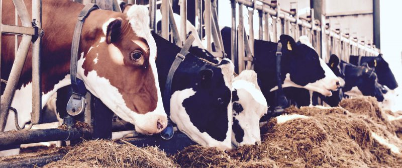 Dairy 8